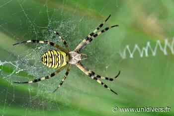 Les arachnides Maison de la nature et de l'arbre mercredi 30 septembre 2020 - Unidivers