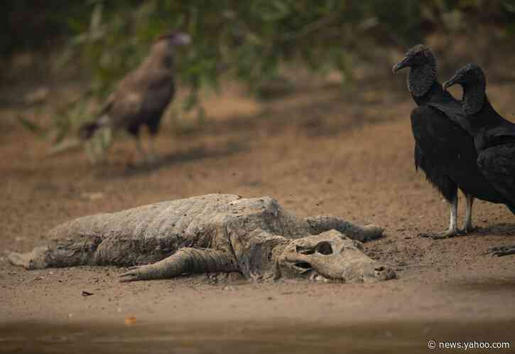 Battle on to save Brazil's tropical wetlands from flames