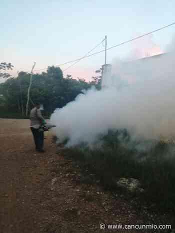 Se intensifican trabajos de termonebuluización en Isla Mujeres - Cancún Mio