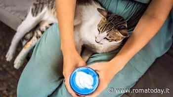 Gita fuori porta con il gatto: cosa fare e cosa vedere a Roma