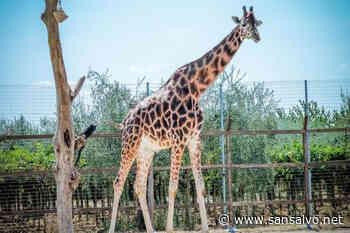 Anche allo Zoo d'Abruzzo di Rocca San Giovanni il personale sanitario entra gratis - SanSalvo.net
