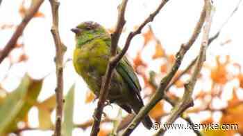 Registran nueva especie de ave en el Alto de San Miguel, Medellín - KienyKe