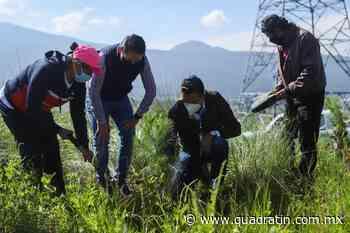 Reforestan El Ánima Sola en Paracho con 2 mil 100 pinos - Quadratín - Quadratín Michoacán