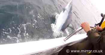 Fisherman catches 'record breaking' 11ft killer shark in British waters