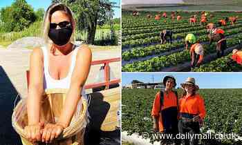 School leavers could be forced to spend their gap year picking fruit on regional farms