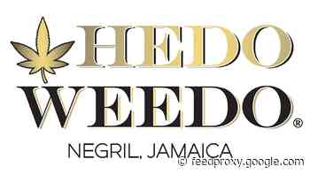 A budding product: Jamaica cannabis dispensary touts 'world class' experience
