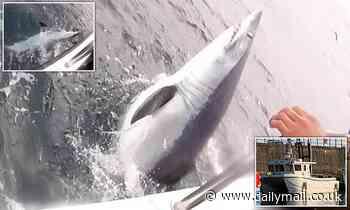 Fisherman believes he hooked Britain's BIGGEST mako shark off coast of Wales