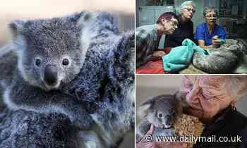 Vets and animal activists help care for the NSW koala population following devastating bushfires