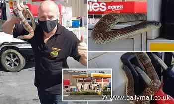 Tiger snake found wrapped around Melbourne petrol pump as venomous reptiles pop up across the city