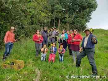 Restauran flora en zona rural de El Contadero - Diario del Sur