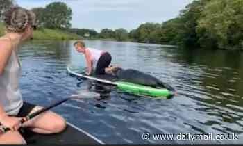 Seal hops aboard a paddleboard in Lincolnshire