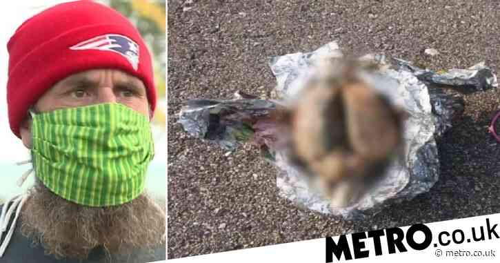 Walker found 'brain' lying on beach – then decided to slice into it for closer look