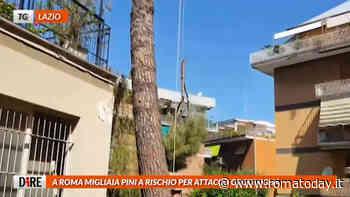 Tg Roma e Lazio, le notizie del 16 settembre 2020