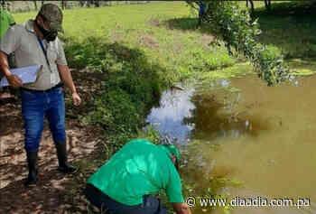 Investigan contaminación de fuente de agua en Ocú - Día a día