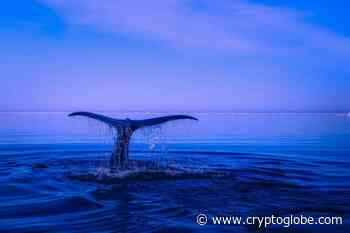 Bitcoin Whales Have Been Accumulating BTC This Year, on-Chain Data Suggests - CryptoGlobe