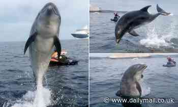There's some fin in the air tonight! Danny the Dolphin leaps from the sea