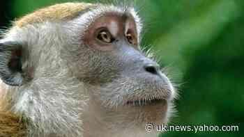 Mischievous monkey steals phone, takes selfies