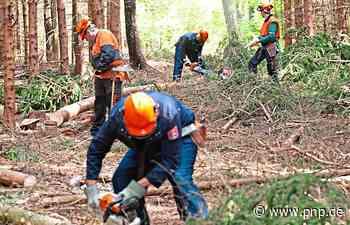 Im Wald erholen – mit Sicherheit - Passauer Neue Presse