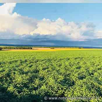 Norte e Nordeste do Brasil terão maior salto no plantio de soja em 4 anos - Notícias Agrícolas