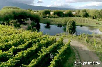 Die wunderbare Welt der Weine - Patagonien: Weinbau am Ende der Welt - arte - TV-Programm - Prisma