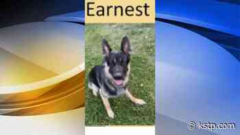 St. Paul police searching for suspect who let therapy dog in training out of yard - KSTP