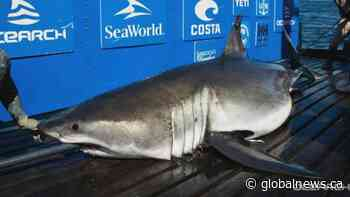 OCEARCH gives update on #ExpeditionNovaScotia