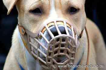Die Hundesteuer in Kandern soll steigen - Kandern - Badische Zeitung
