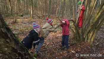 Gemeinde plant Elternbefragung: Bekommt Bad Rothenfelde einen Waldkindergarten? - noz.de - Neue Osnabrücker Zeitung