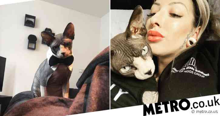 Pampered Sphynx cat lives his best life with bubble baths, massages and being driven around in a pram