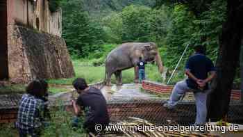 Aus Gefangenschaft befreit: Einsamster Elefant der Welt findet neues Zuhause