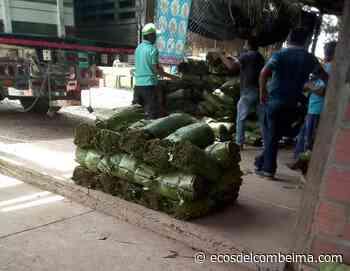 Coyaima tendrá centro de acopio de hoja de cachaco   Patrimonio Radial del Tolima Ecos del Combeima Ibagué - Ecos del Combeima