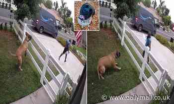 Terrified Amazon driver vaults fence to escape 13-stone dog - only to realize it wants to be friends