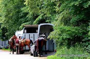 """Pferde-Diebe unterwegs? Halter melden massenweise """"verdächtige Wahrnehmungen"""""""