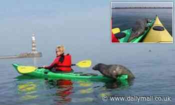 Adorable moment seal pup clambers aboard kayak to pose for photo off the Sunderland coast