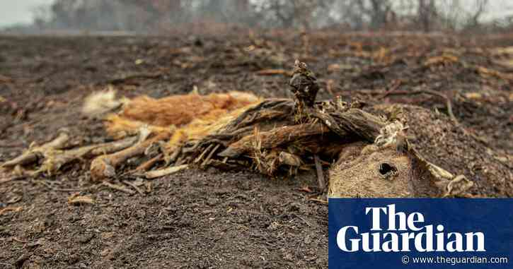 Brazilian wetlands fires started by humans and worsened by drought