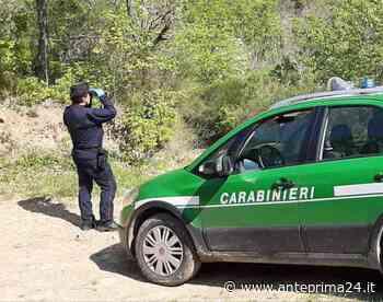 Avellino, controlli da parte dei Carabinieri del Gruppo Forestale: denunce e sequestri - anteprima24.it
