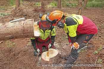 Die Hüter des Waldes: Ausbildung zum Forstwirt bei den Niedersächsischen Landesforsten - Kreiszeitung Wochenblatt