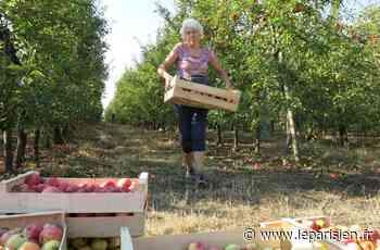 Entre Saint-Pierre-du-Perray et Lieusaint, des pommes et des poires comme projet béton - Le Parisien