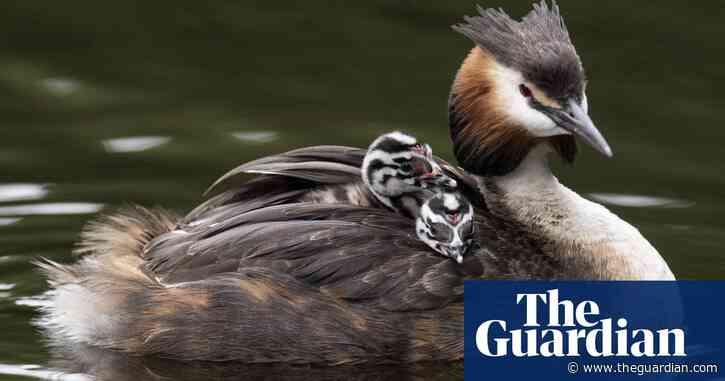 10 memorable UK wildlife discoveries: readers' tips