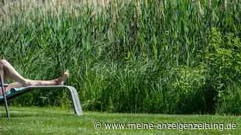Frau sonnt sich im eigenen Garten – und kriegt Schelte von Nachbarin