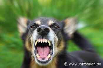 Bamberg: Zwölfjähriger wird von Hund mehrfach gebissen - Hundehalter gesucht