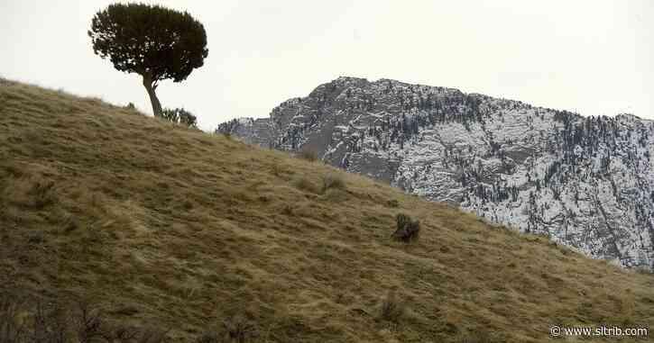 Letter: The Bureau of Land Management harms our lands
