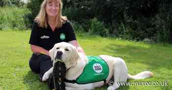 Support dog Fleck back to office after summer helping autistic adults on Zoom