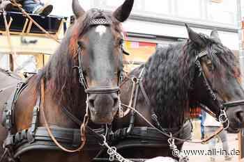 Mehrere Verletzte und eine zerstörte Frontscheibe: Pferde gehen mit Kutsche bei Scheidegg durch - Scheidegg - all-in.de - Das Allgäu Online!