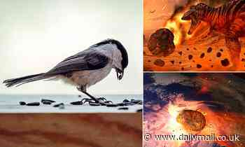 Scientists reveal why birds survived impact from giant asteroid that hit earth 66 million years ago