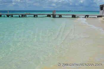 Ayuntamiento de Isla Mujeres prevé fin de arribazón de sargazo sin mayor afectación - Galu