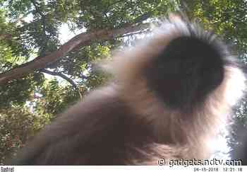 Camera Traps and Motion Sensors Show the Wacky Side of Wildlife