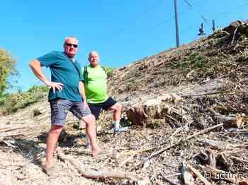 Yvelines. Maule : l'abattage des arbres le long des voies ferrées fait polémique - actu.fr