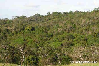 Inventário Florestal aponta 11% de vegetação nativa em Engenheiro Coelho - O Regional