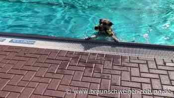 So war der Hunde-Badetag Almke
